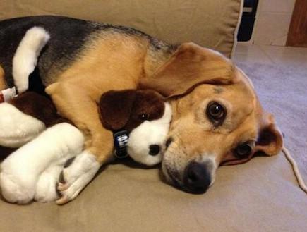 כלב מחובק עם דובי (צילום: dailypicksandflicks.com)