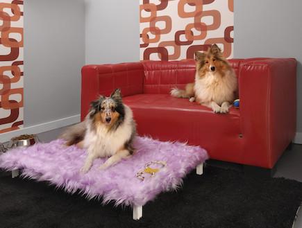 בית מלון בוטיק לכלבים (צילום: עודד קרני)