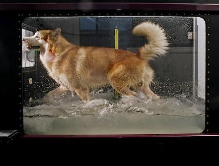 הידרותרפיה לכלבים - צילום יגאל פרדו (צילום: יגאל פרדו)