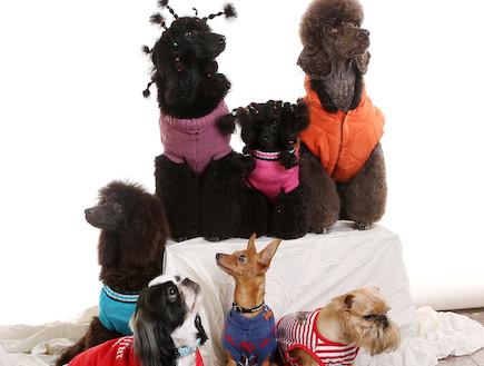 צילומי קטלוג לכלבים (צילום: עודד קרני)