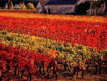 עמק הלואר, צרפת