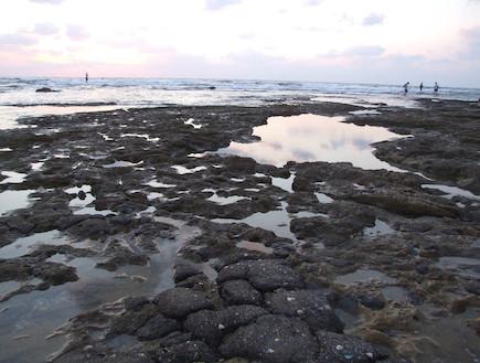 החוף בתל שקמונה 2 (צילום: איל שפירא)