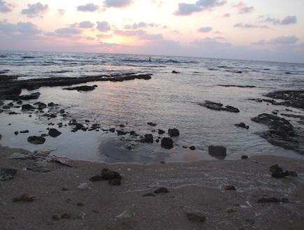 החוף בתל שקמונה (צילום: איל שפירא)