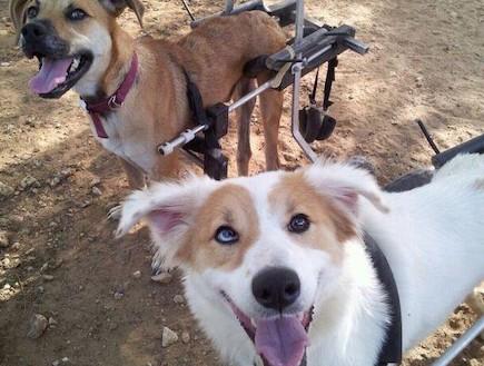 כלבים - תנו לחיות לחיות