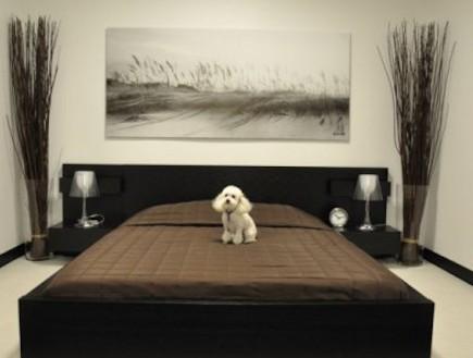 מלון 5 כוכבים לכלבים
