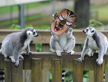הלמורים שהתחפשו בגן החיות (צילום: thesun.co.uk)