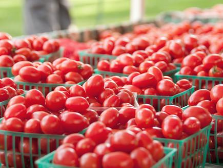 עגבניות (צילום: Shi Liu, GettyImages IL)