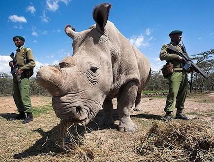 חילים בקניה (צילום: הטלגרף)