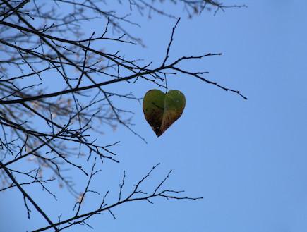 עץ עצוב בחורף