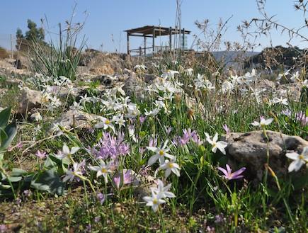 הפרגולה המשקיפה על הפריחה (צילום: ערן ודוד גל-אור, מסלולים> להתאהב בארץ מחדש)