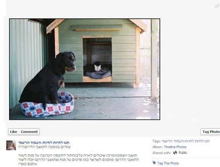 דואגים גם לבעלי חיים (צילום:  Photo by Flash90)
