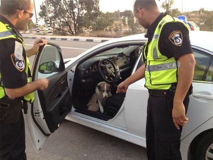 כלב מי שלא מסתתר (צילום: דוברות אגף התנועה, משטרת ישראל)