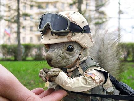 חיות צבאיות (צילום: freakingnews.com)