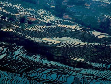 שדות אורז מוצפים