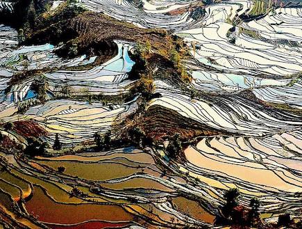 שדות האורז ביפן
