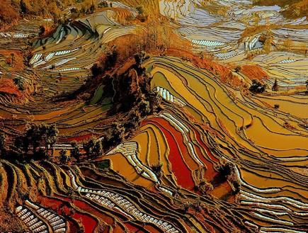 שדות האורז הצבעוניים בסין