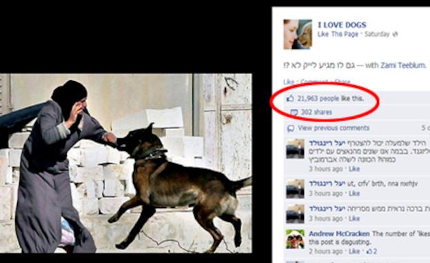 כלב תוקף אישה פלסטינית (צילום: KateRiep_Godbye)