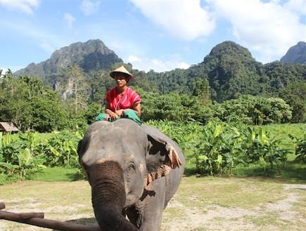 פיל ומאמנו סמוך לפארק קאו סוק
