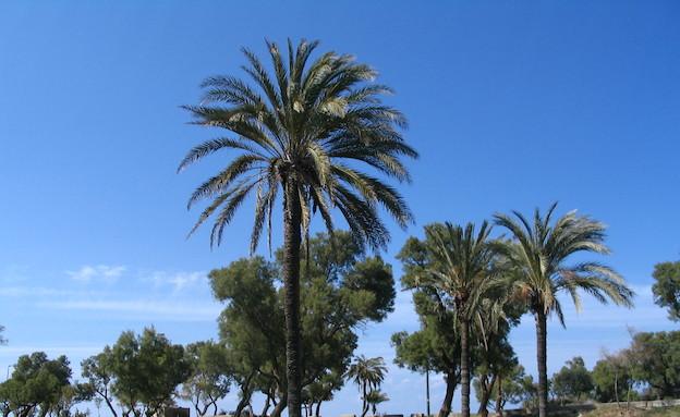 גן אשקלון  (צילום: חנן לבבי,  יחסי ציבור )