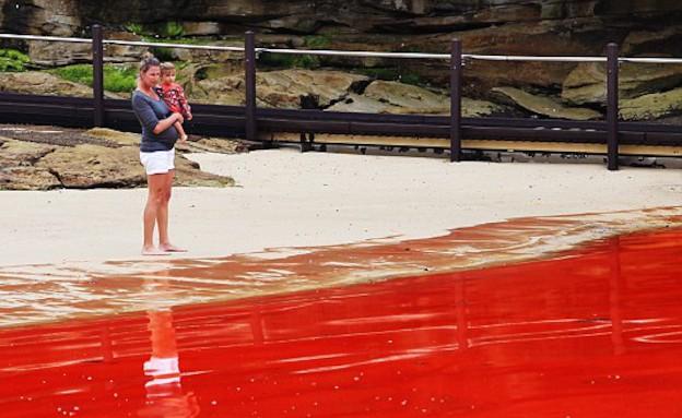 מי הים הפכו לאדומים (צילום: צילום מסך daily mail)