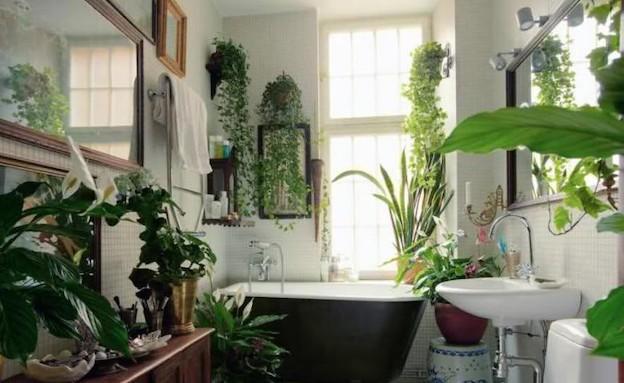 צמחייה באמבט (צילום: מתוך האתר terriplanty.blogspot.com)