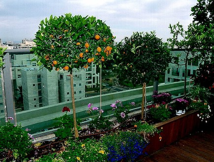 איך ליצור פרטיות במרפסת ?