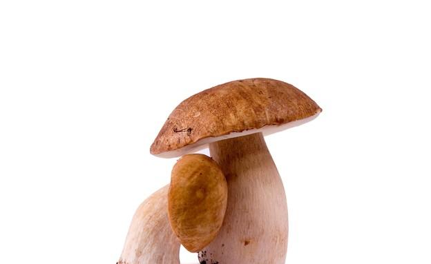 פטריות (צילום: istockphoto)