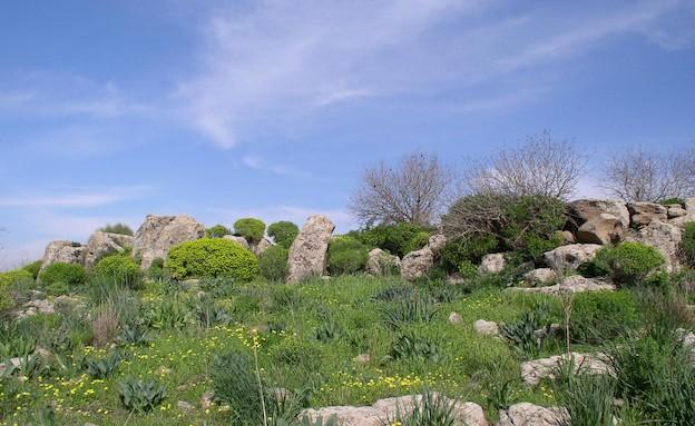 גמלא (צילום: איל שפירא)
