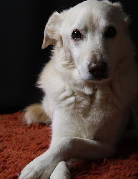 כלב (צילום: Thinkstock)