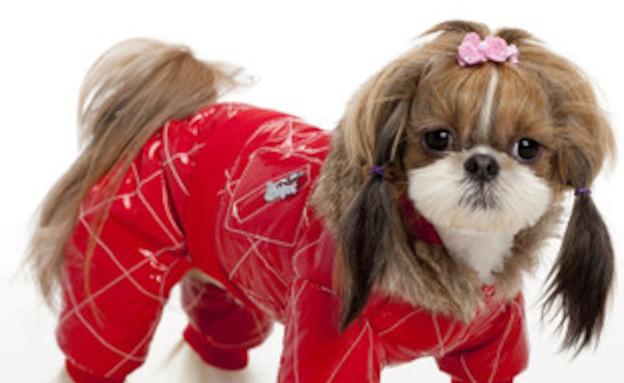 כלבים באדום (צילום: 1petmall.com)