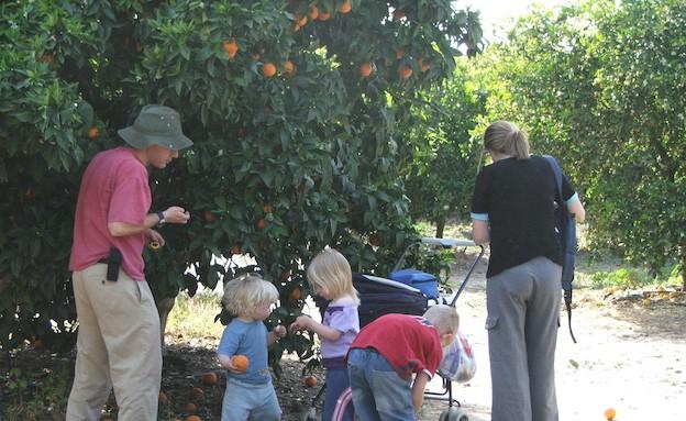 קטיף בשביל התפוזים