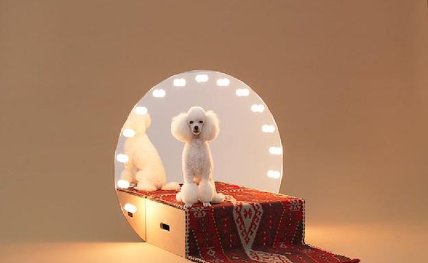 כלבים 3grcic (צילום: Hiroshi Yod)