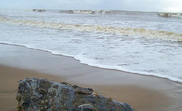 ראש תנין נשטף לחוף (צילום: thesun.co.uk)