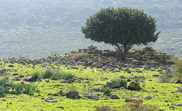 תל כינרות (צילום: יותם יעקובסון)
