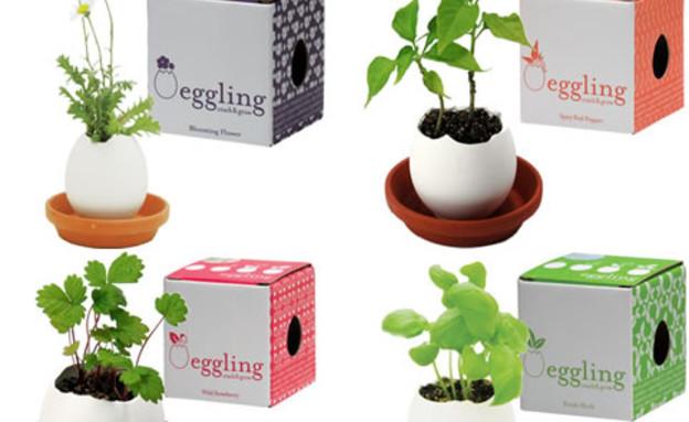 החמישייה ביצים עם קופסאות (3) (צילום: www.eggling)