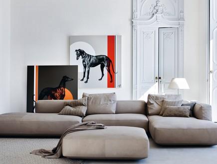 ספות תמונה סוס