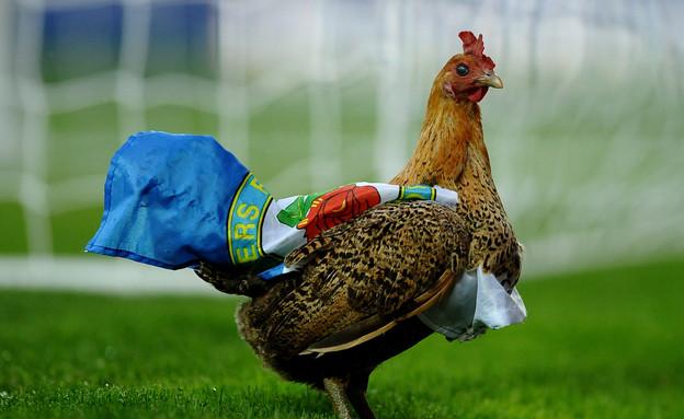 תרנגול בכדורגל (צילום: Laurence Griffiths, GettyImages IL)