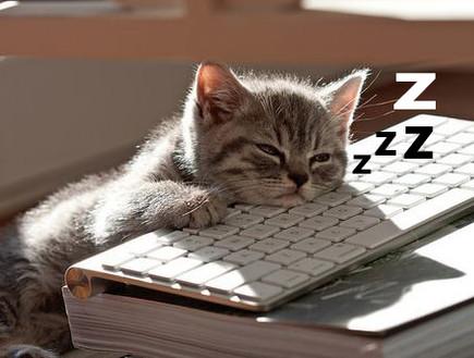 חתול ישן מול מחשב