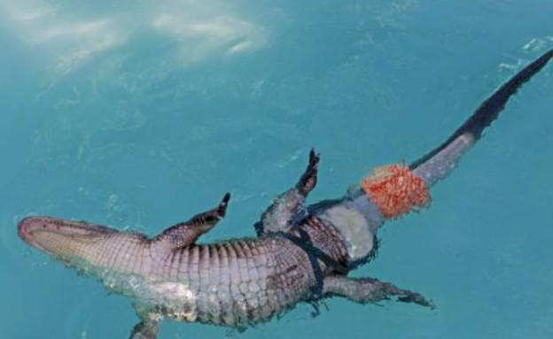 התנין הביוני