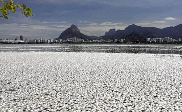 אלפי דגים בריו, דגים על החוף (צילום: dailymail.co.uk)