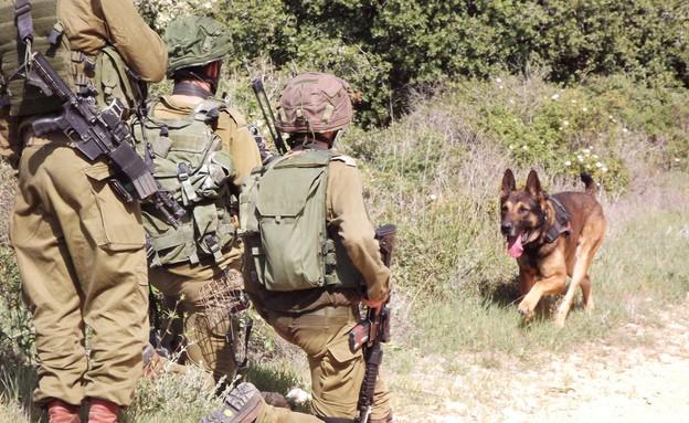 """אימון של יחידת עוקץ ושל יחידת רוכב שמים (צילום: שי לוי, פז""""ם)"""