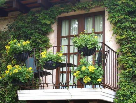 מרפסת, מעקה, פרחים צהובים, צילום עופר פאול