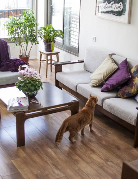 דירה תל אביב, סלון חתול (צילום: סיון אסקיו)
