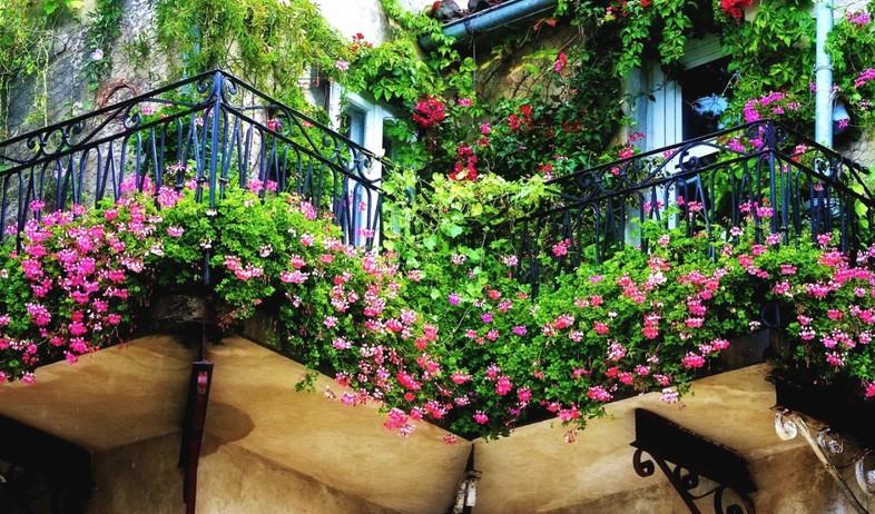 מרפסת, מעקה פרחים (צילום: עופר פאול)