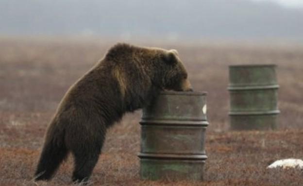 דובים מתמסטלים (צילום: gizmodo.com)