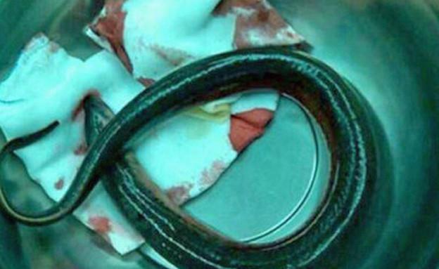 צלופח נתקע בבטן (צילום: huffingtonpost.com)