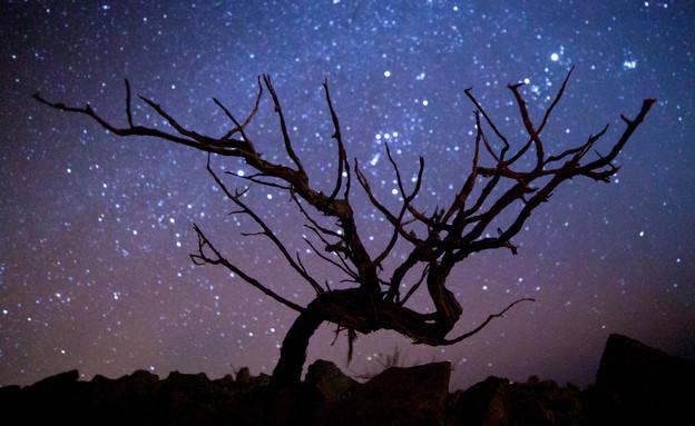 עץ (צילום: דן ג'וספסון)