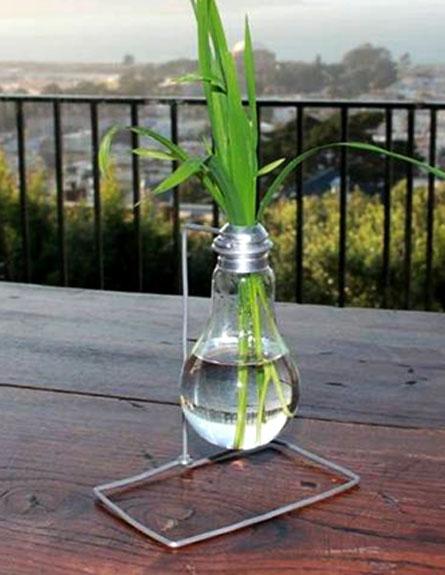 הצמח הזוהר יחליף את הנורה? (צילום: Glowing Plants)