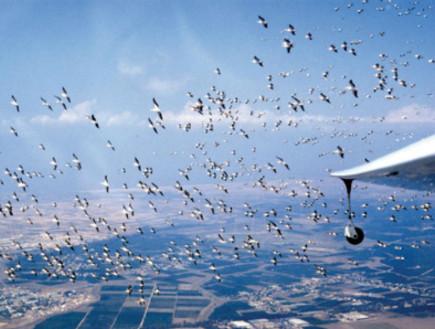 ציפורים ליד מטוס