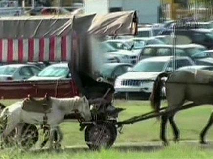 """""""הסוסים לא מחזיקים מעמד"""" (צילום: חדשות 2)"""